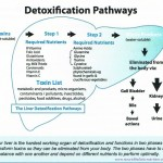 What happens when you detox?