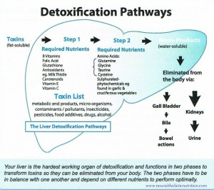 1370037958_detox pathways