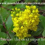 Berberine: the next super herb?