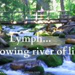 Lymph – flowing river of life!