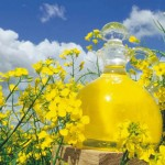 Canola Oil – Not good for you