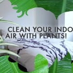 A dozen tips to reduce your exposure to indoor toxins